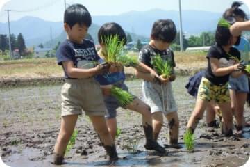 稲つくり保育(年長児対象)